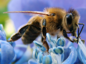 honey-bee-cell-phone