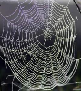 dewy_spider_web