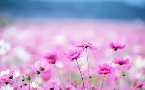 roz fl