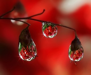 Rain-Drop-Photography-10