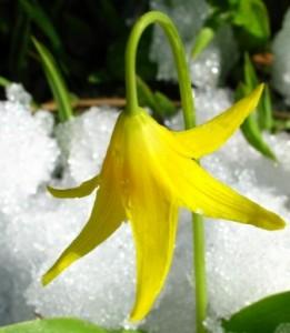 iarna-zapada-si-flori-11_d3247b39503287