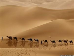 camel-caravan-libya-nice-wallpaper-1024x768