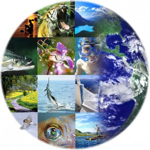 jjphoto_globe_collage