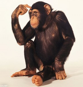 The fact that chimp DNA is similar to human DNA is not a proof of evolution. We could just as easily claim that it is proof of creation, because we would expect things designed by the same designer to have similarities.