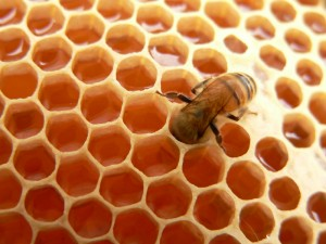 The Miracle of Honey in the Qur'an