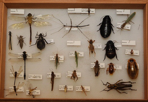 Insects occupy a very different niche than other species. As the fossil record shows, insects have been around for at least 400 million years. Over that time, various catastrophes have taken place, and large numbers of animal species have become extinct. Insects are among the few living things not to have been affected.