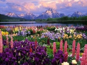 Beautiful-Flowers-mountain