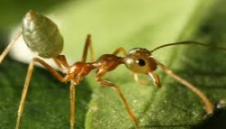 Compass in the Ant's Eye