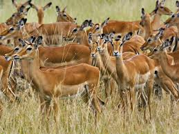 All creatures have body structures consisting of systems that would not work even if one of the components were missing, such as the cooling system of gazelles.