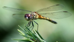 The Miraculous Design of Insects Flight
