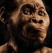 Homo naledi: The Evolutionist Scenario