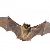 Bats Teach Us about Safety
