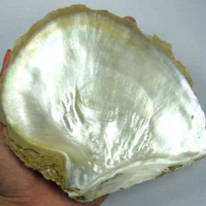 This special damage decreasing structure of the mother-of-pearl has become a subject of research for many scientists.