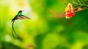 Hummingbirds and Nectar2