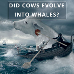 Did Cows Evolve into Whales?