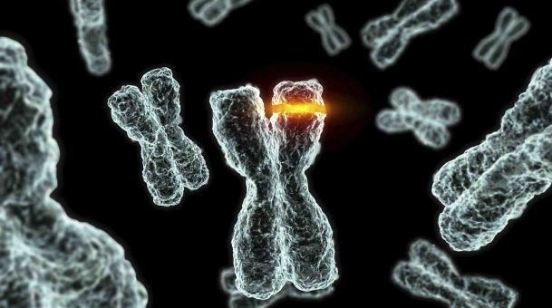 Can Mutations Produce New Species?