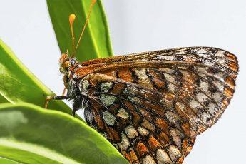 The Symmetry in Wings