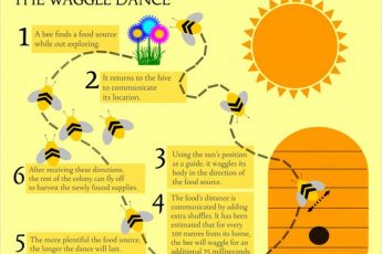Bees' Methods of Communication