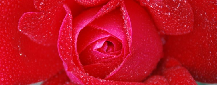 Valentine's Day: An Islamic Perspective
