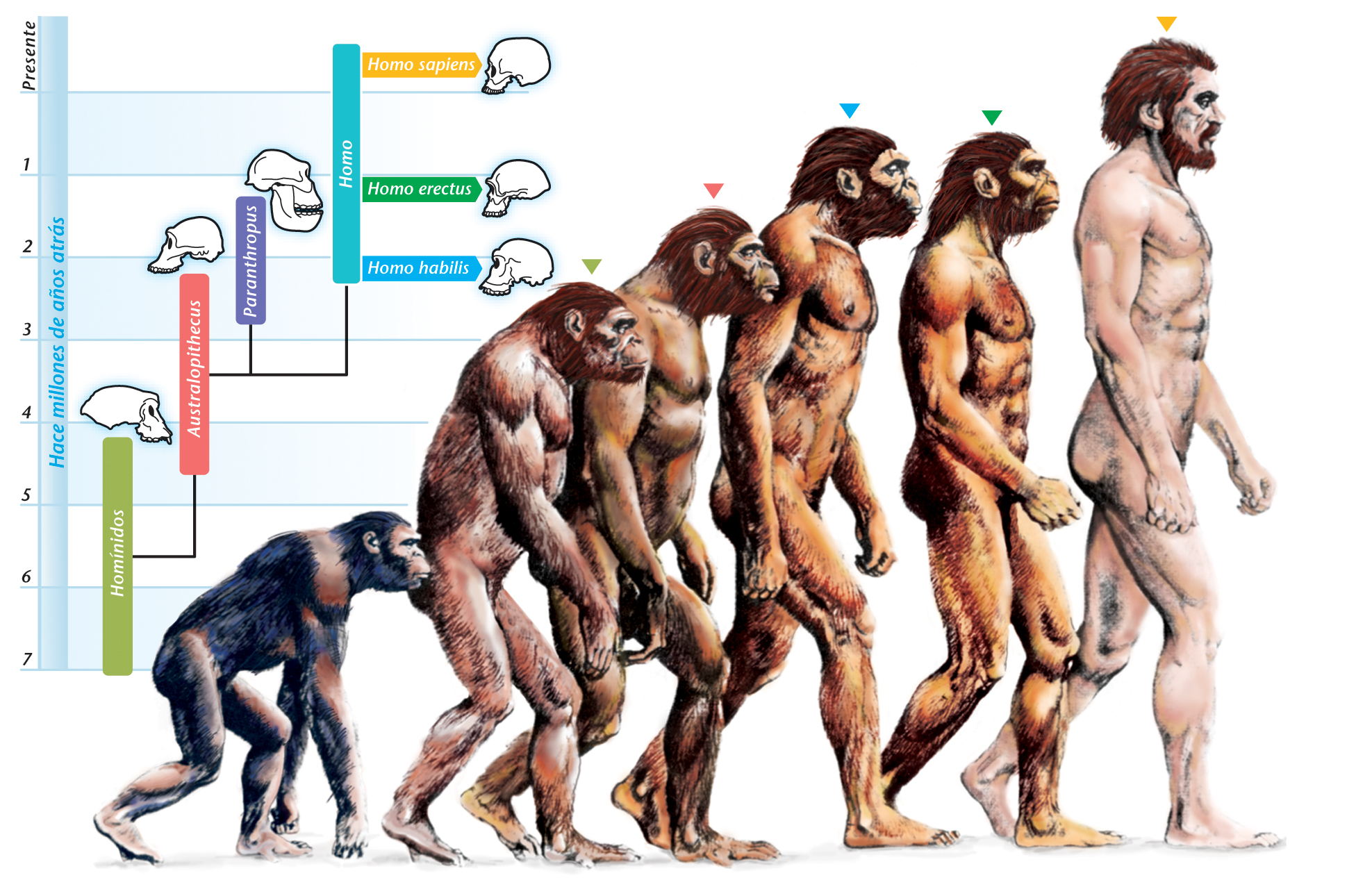 "Why Is the Theory of Evolution Not the ""Basis of Biology""?"