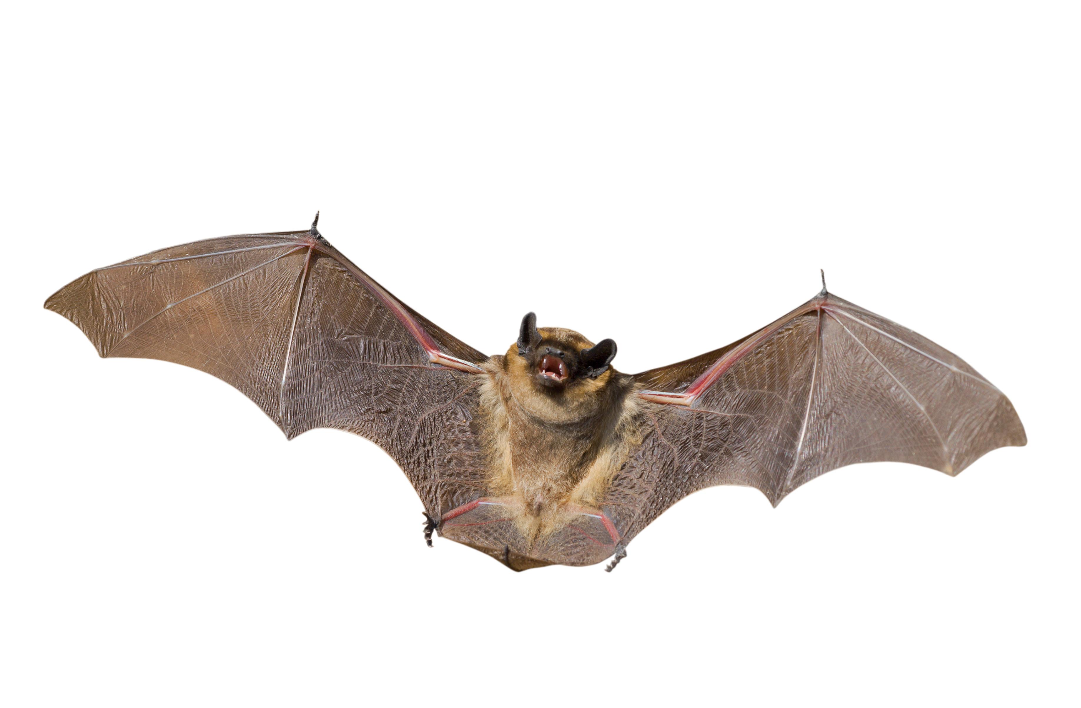 Bats Teach Us about Safety
