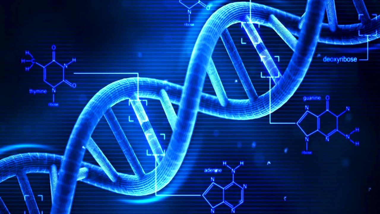 Recurring DNA in Genome Structure