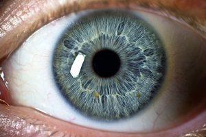 Perception in the Eye