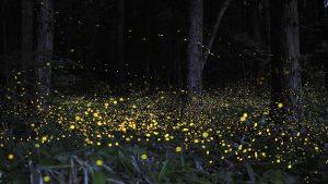 Luminescent Creatures